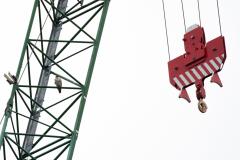 Juvenile on the Crane. Photo by James Sellen.