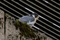 On the ledge. Photo courtesy of Jonathan Mullin.
