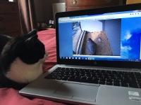 Feline Fan