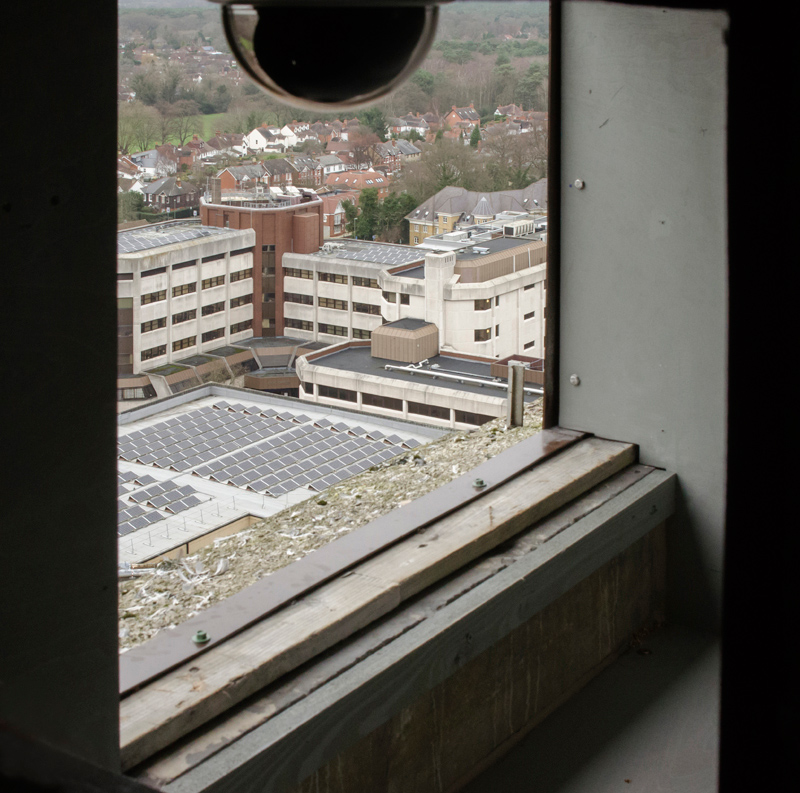Webcam Eye View. Photo by James Sellen