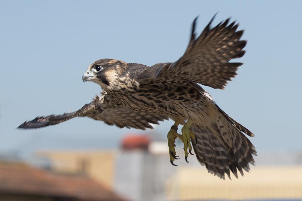 Juvenile Release. Photo by James Sellen.